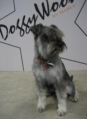 Honden foto's – pagina 2